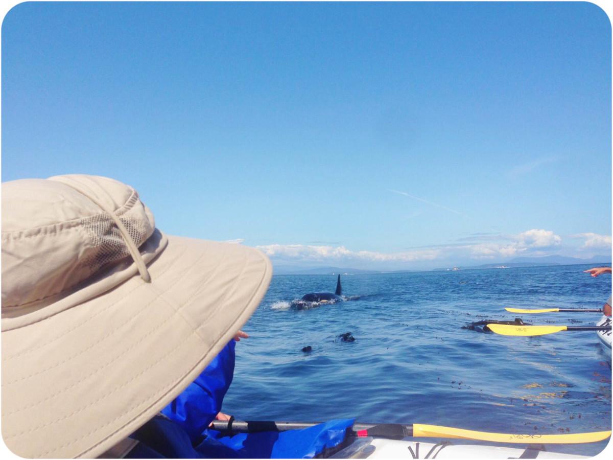 kayak san juan island