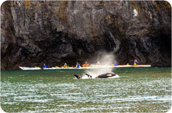 kayaking with orcas san juan island
