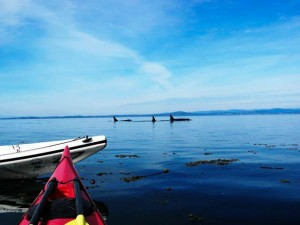 kayaking-with-whales-001