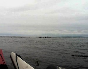 kayaking-with-whales-005