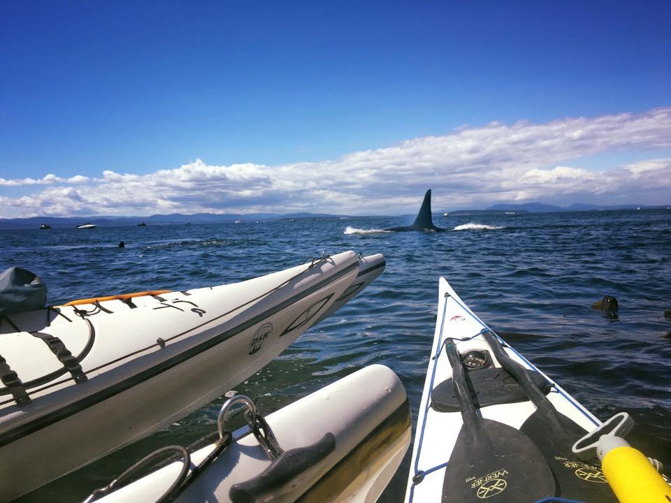 Whale Watching San Juan