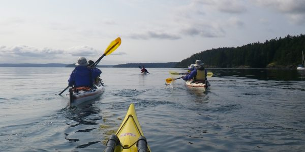 Paddlers moving along the shore