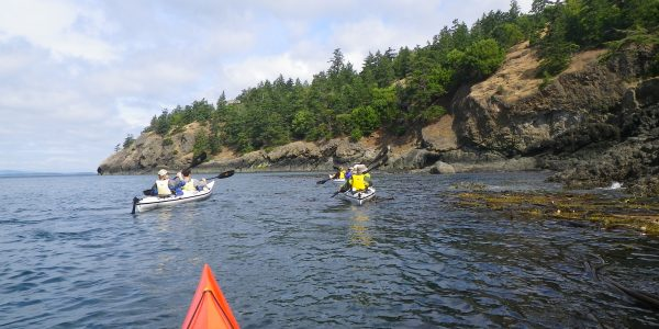 Kayak Tour passing large kelp beds