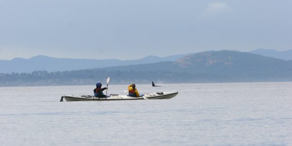 Kayakers with orca whale