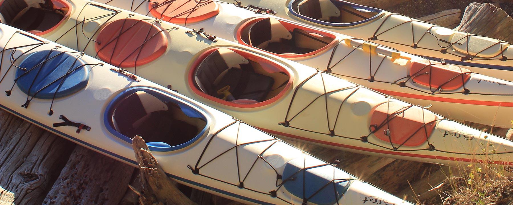 Kayak Tours San Juan Island Discovery Sea Kayaks