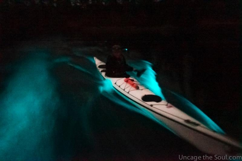 bioluminescence kayaking tour